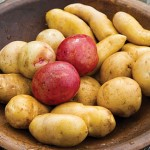 Burpee offers 26 potato varieties