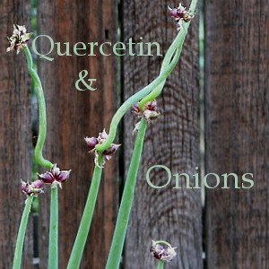 Onions and Quercetin