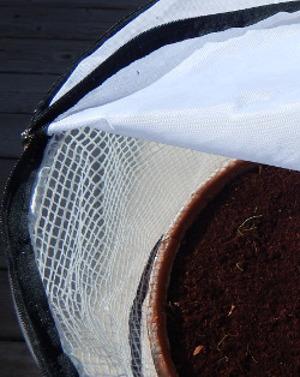 carrot seedlings in pop-up Greenhouse